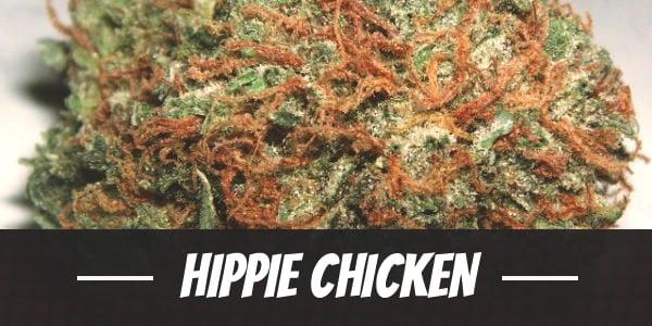Hippie Chicken