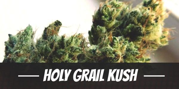 Holy Grail Kush