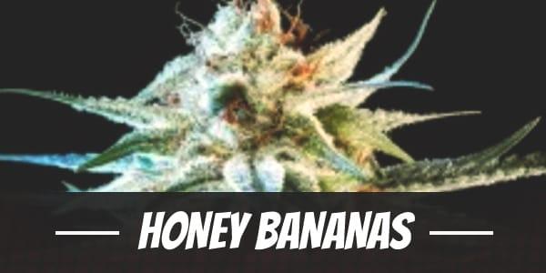 Honey Bananas