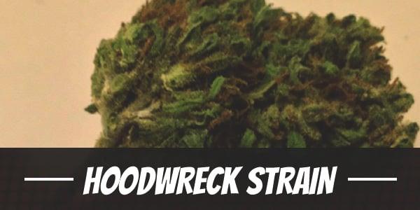 Hoodwreck Strain