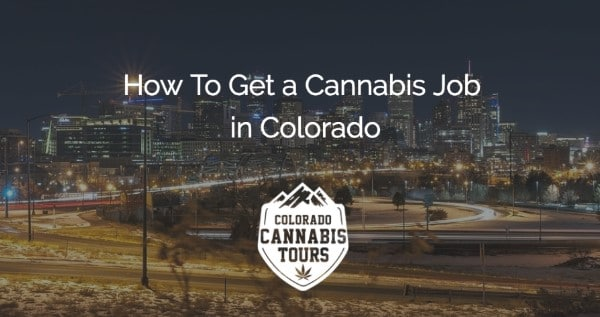 How To Become A Trimmer Or Budtender In Colorado