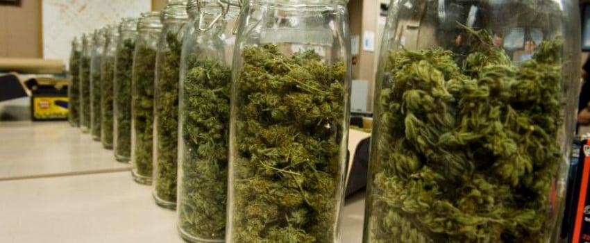 How To Cure Marijuana Buds