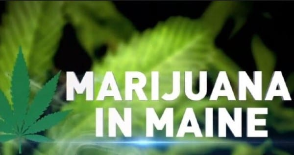 How To Get A Trimmer Or Budtender Job In Maine
