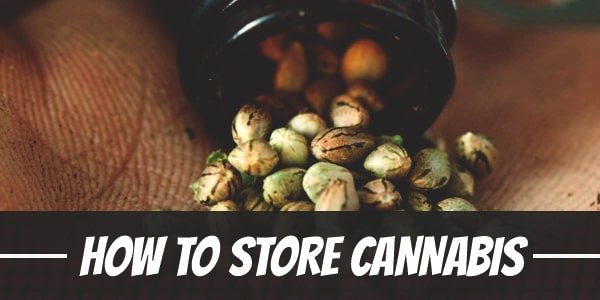 How To Store Cannabis Seeds