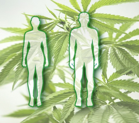 How does THC affect the body