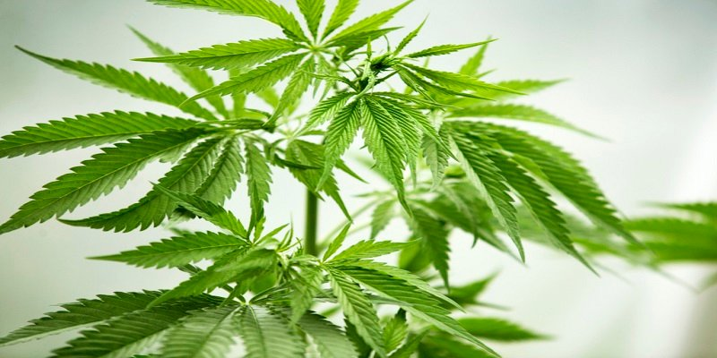 How long does marijuana stay in body