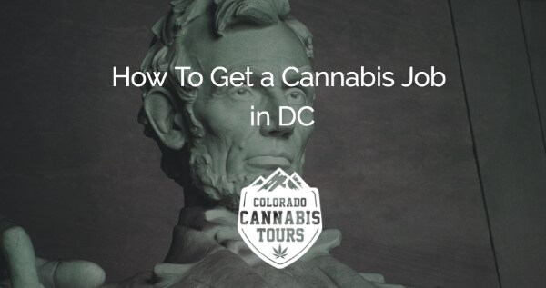 How to Get A Trimmer Or Budtender Job In Washington, D.C.