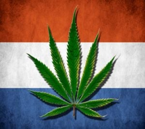 How to obtain cannabis in The Netherlands