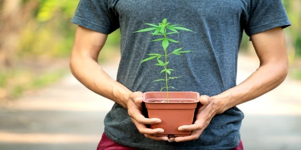 How to safely move cannabis plants outdoors
