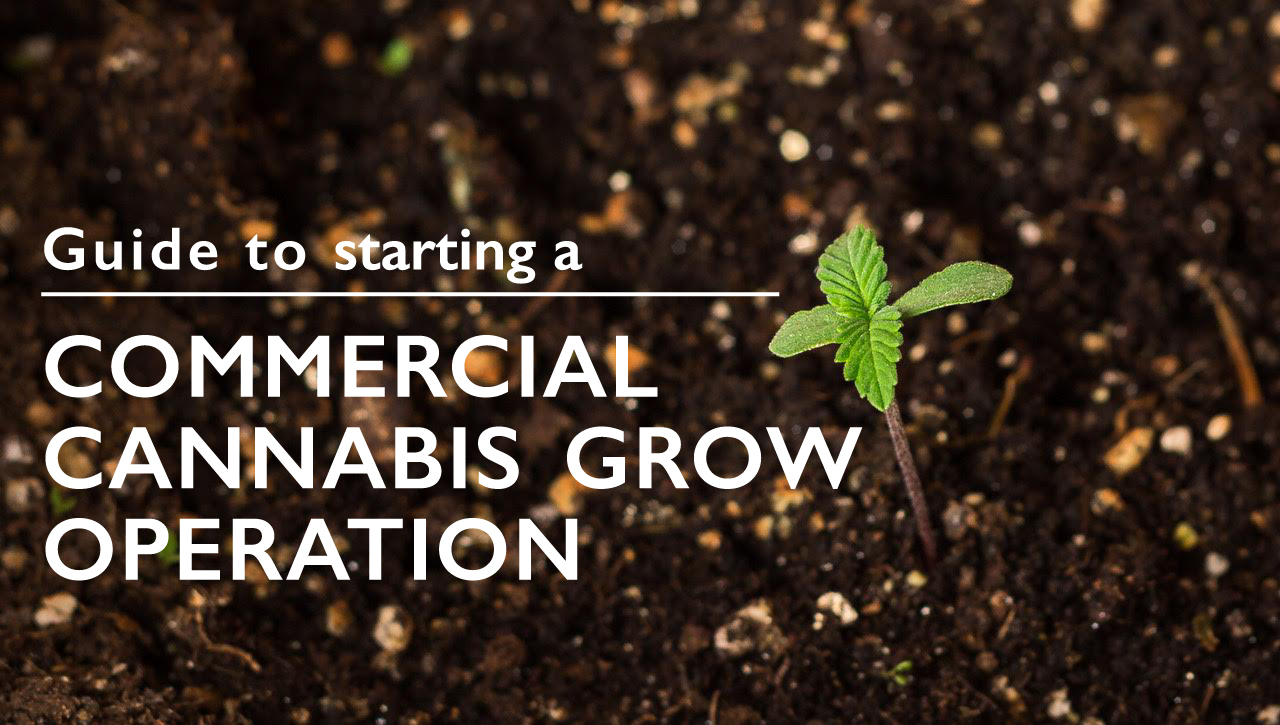 How to start a commercial grow operation in California
