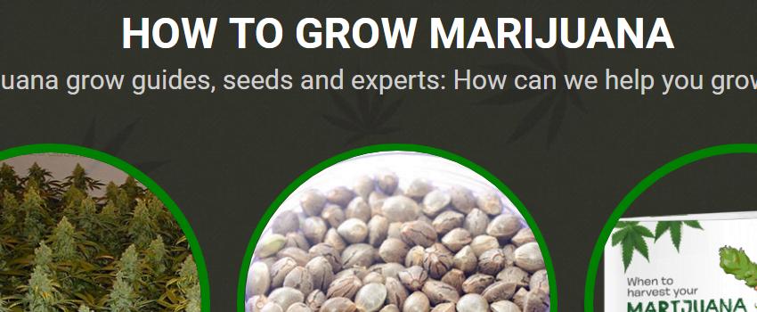 How_To_Grow_Marijuana