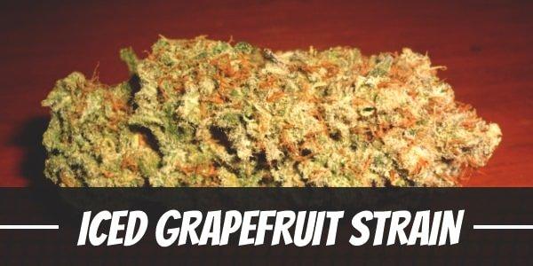 ICED Grapefruit Strain