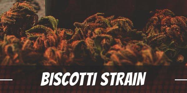 biscotti strain info