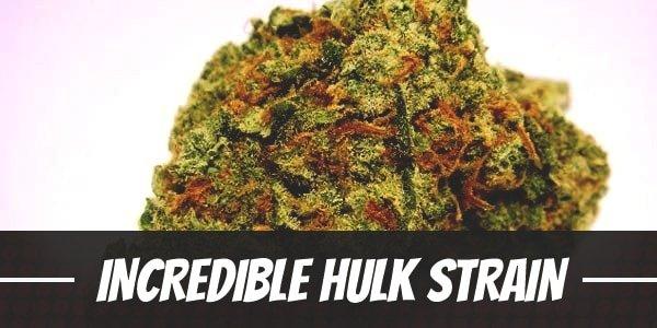 Incredible Hulk Strain