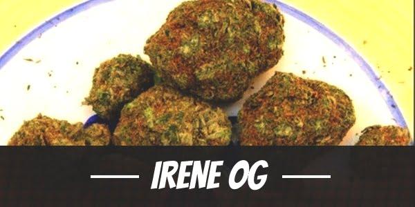 Irene OG