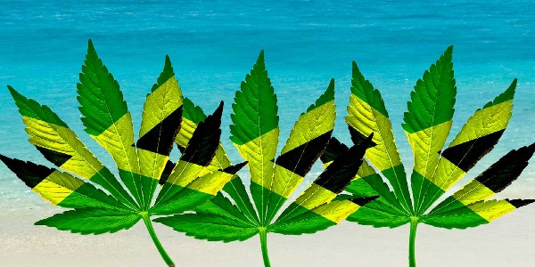 Is Weed Legal in Jamaica - image powered by https://www.negrilhotels.com/