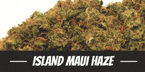 Island Maui Haze