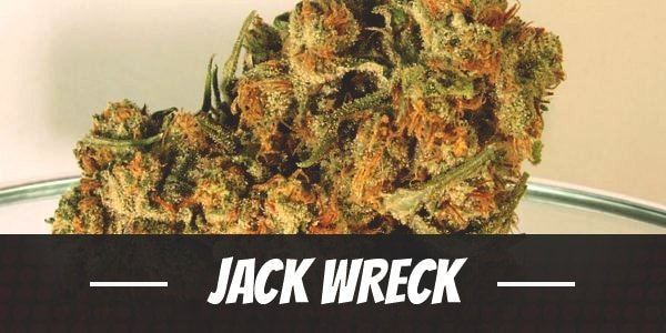 Jack Wreck