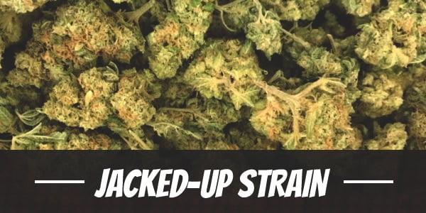 Jacked-Up Strain