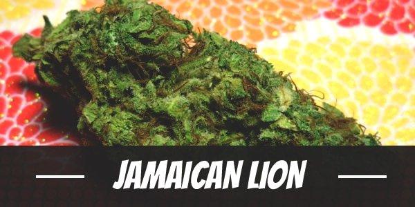 Jamaican Lion