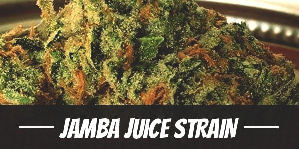 Jamba Juice Strain