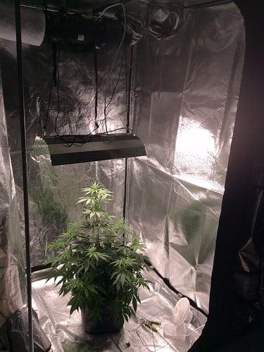 Secret Jardin L160 tent