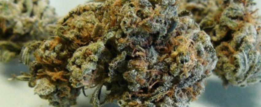 Jasmine Medical