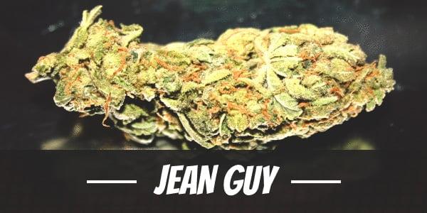Jean Guy