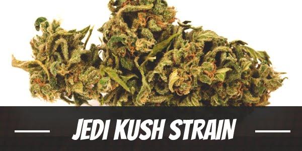 Jedi Kush Strain