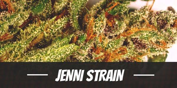 Jenni Strain