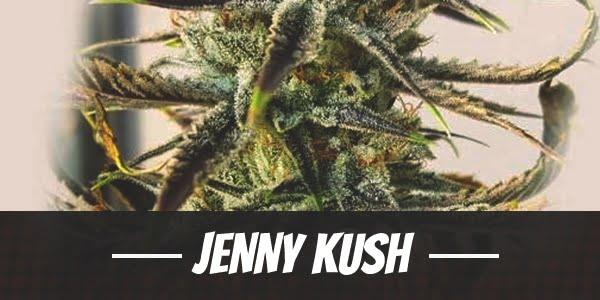 Jenny Kush