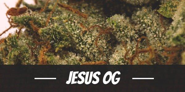 Jesus OG