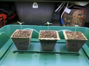 after germination