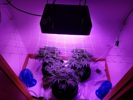 for a SCROG