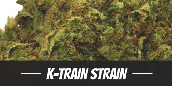 K-Train Strain