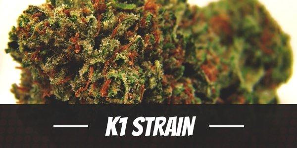 K1 Strain