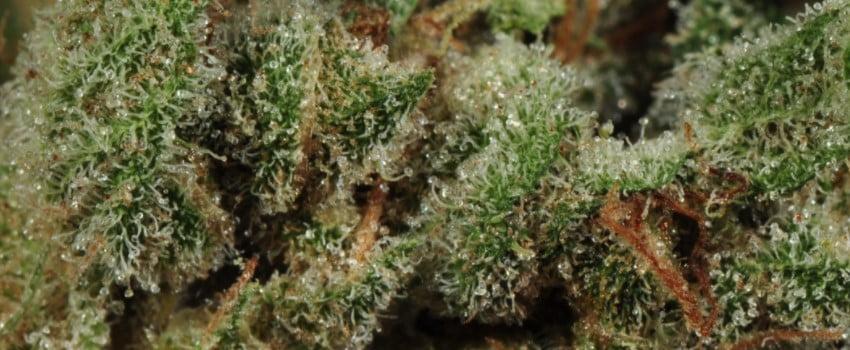 K2 Medical