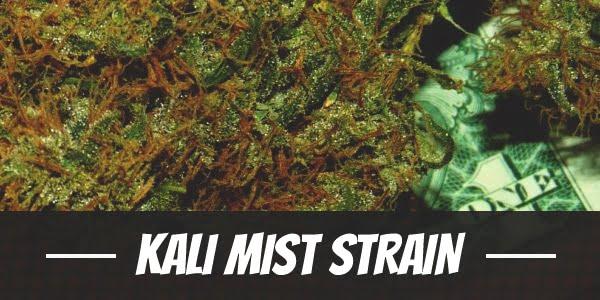 Kali Mist Strain