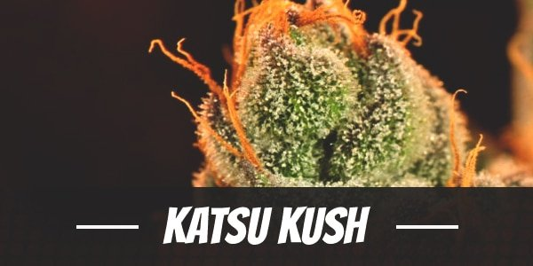 Katsu Kush