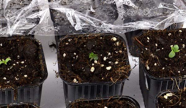 Keep the marijuana grow environment optimized
