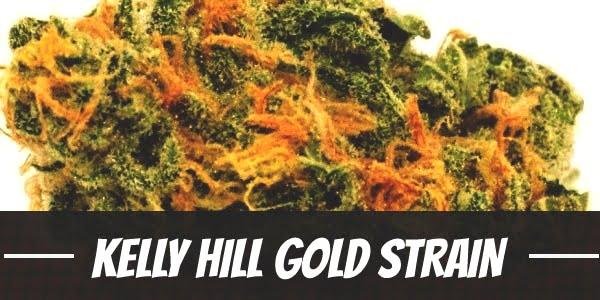 Kelly Hill Gold Strain