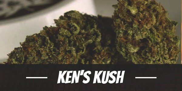 Ken's Kush
