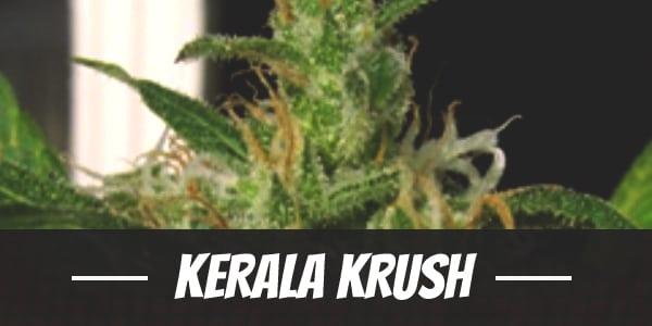 Kerala Krush