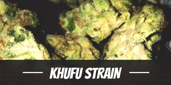 Khufu Strain