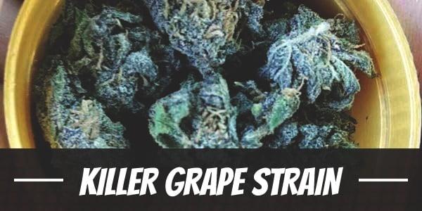 Killer Grape Strain