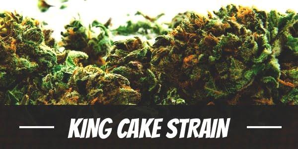 King Cake Strain