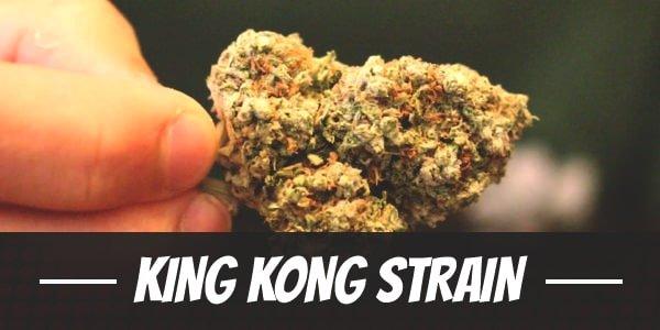 King Kong Strain