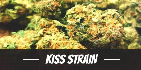Kiss Strain