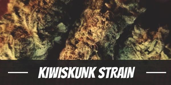 Kiwiskunk Strain