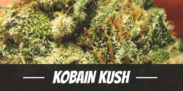 Kobain Kush